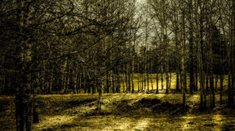 The Woods-1